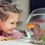 Photograph of little cute girl observing goldfish