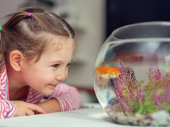Best pets for childcare aged children